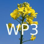 Logo du groupe Rapsodyn : WP3 - Genetic and molecular determinants of OSR adaptation to N constraints
